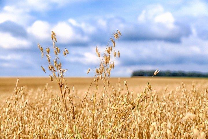 Влияние зерновых культур на изменение климата